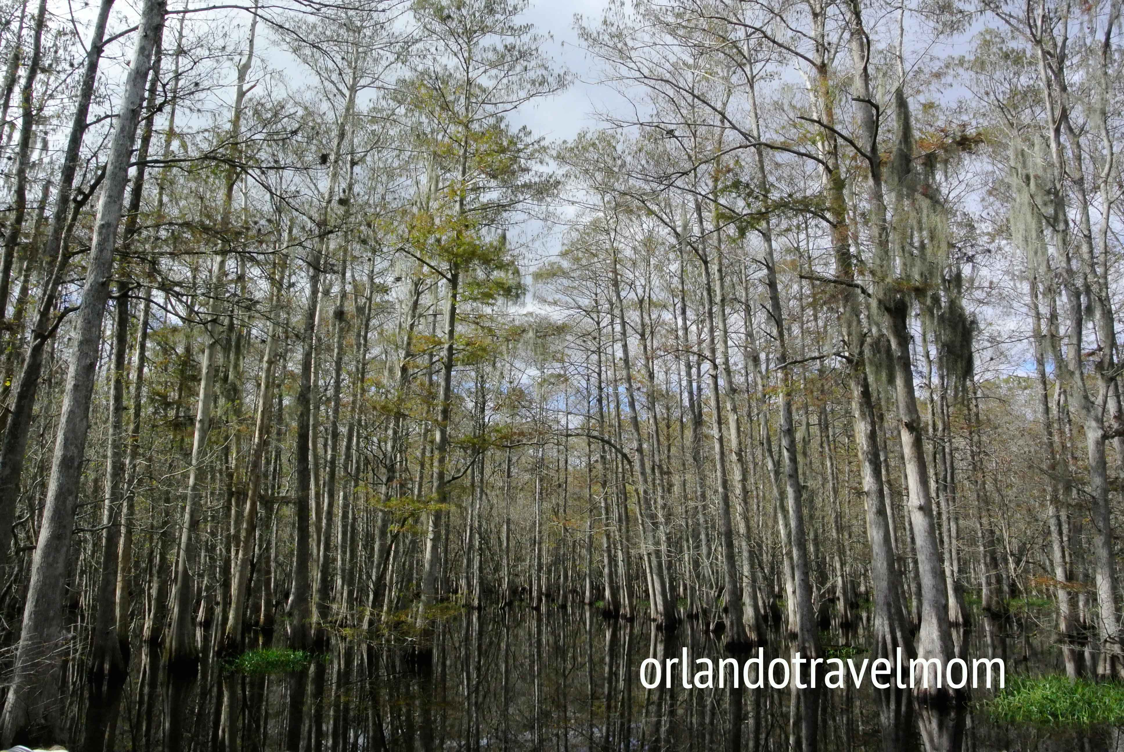 Airboat rides around Orlando   Orlando Travel Mom